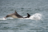 dolphin whyw15_mon_800_9660