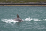 dolphin whyw15_mon_800_9673