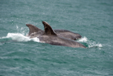 dolphin whyw15_mon_800_9687