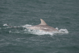 dolphin whyw15_mon_800_9693